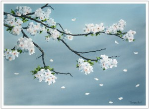 Hull-CherryBlossomShowers